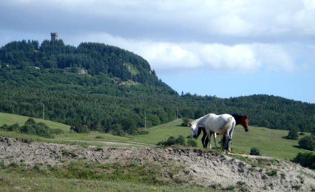 Foto: Radicofani, la rocca vista da sud